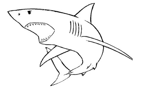 how to draw a doodle shark gallery for gt shark open drawing image file