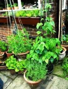 container vegetable gardens growing in pots indoor or balcony potted apps directories