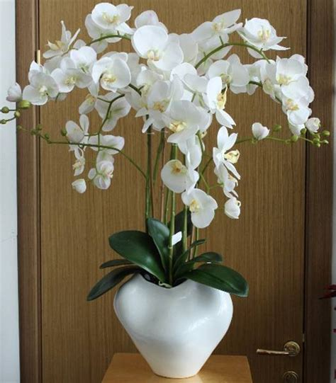 Flowering House Plants For Windows Sophisticated Orchids For Interior Decorating And