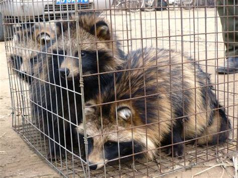 fur farming a book of information about fur bearing animals enclosures habits care etc classic reprint books luxury brand armani goes fur free an animal rights