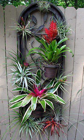 outdoor air plant  bromeliad display succulents