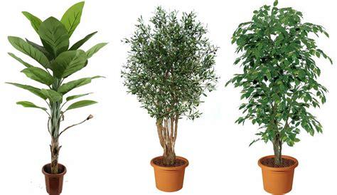 lade da giardino economiche piante artificiali guida a come usarle in giardino