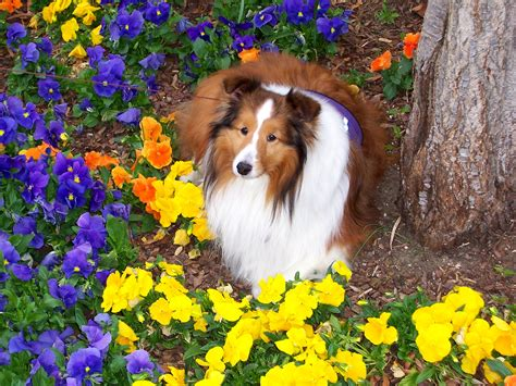 breeders in puppies in flowers www imgkid the image kid has it