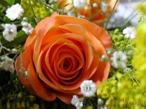 imagens de flores e rosas apaixonado por essa flor que lida que linda vejam