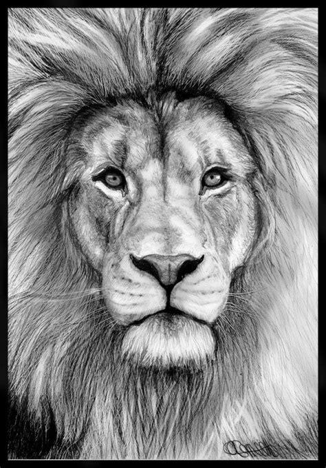 animal pencil drawings  pinterest pencil illustration