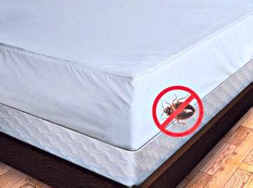 bed bugs don t bring don t bring bed bugs home interstate pest management