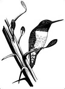 histories of american cuckoos goatsuckers hummingbirds and their allies orders psittaciformes cuculiformes trogoniformes and micropodiiformes classic reprint books american avocet