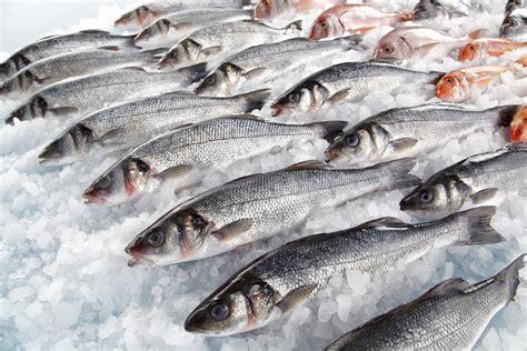 bbc test finds fresh fish  british supermarkets