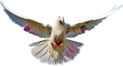 cara membuat format gambar menjadi png bahan edit foto format png burung