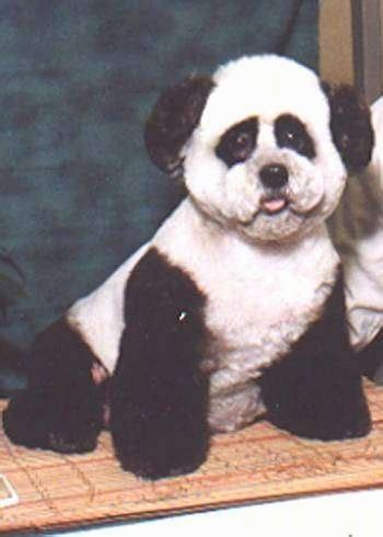 panda chin puppy haircuts clothes on your dog or puppy 4