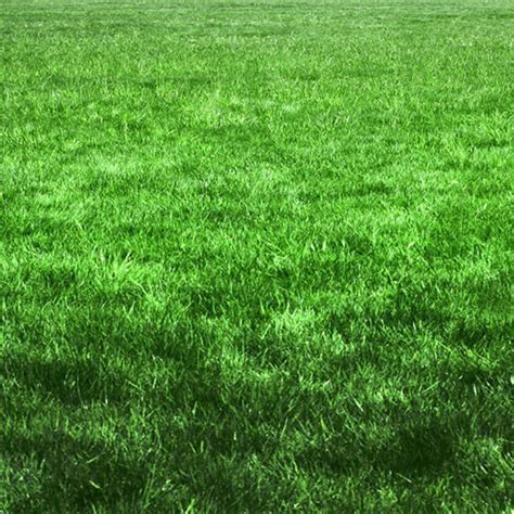 Landscape Fabric Grass Seed Shady Lawn Mix Grass Seed 3 Pounds Walt S Organic