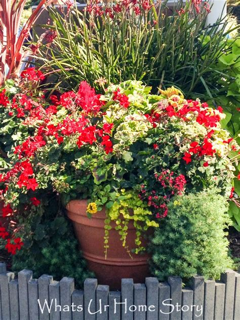 container gardening whats ur home story