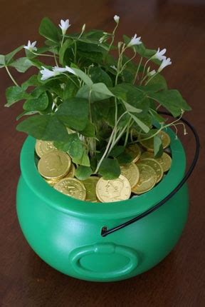 st patrick s day centerpiece tyxgb76aj quot gt this and