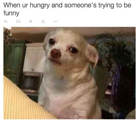 Funny Hungry Meme - 17 best ideas about hungry funny on pinterest hungry