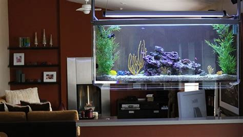 fish tank living room top 7 aquarium designs for your interior design