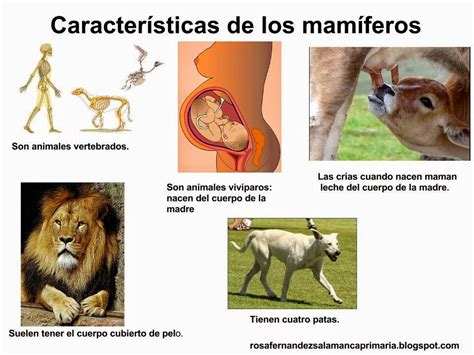 animales vertebrados mamiferos caracteristicas portal maestra de primaria los mam 237 feros y las aves 2 186 de primaria