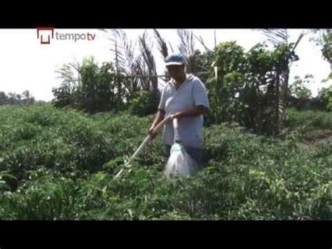 Alat Semprot Tanaman Sederhana inovasi pertanian penyemprot tanaman elektrik doovi