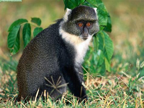 imagenes comicas de monos fotos de monos i