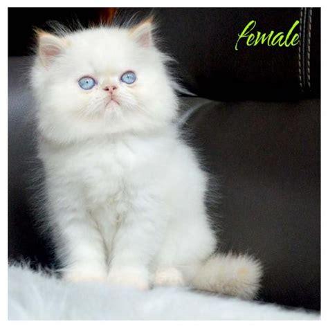 Jual Keranjang Kucing Bandung jual anakan kucing