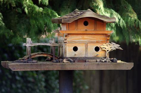 beautiful bird houses photos images