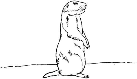 printable prairie dog targets how to draw prairie dog