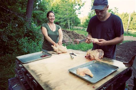 backyard poultry rearing raising backyard chickens