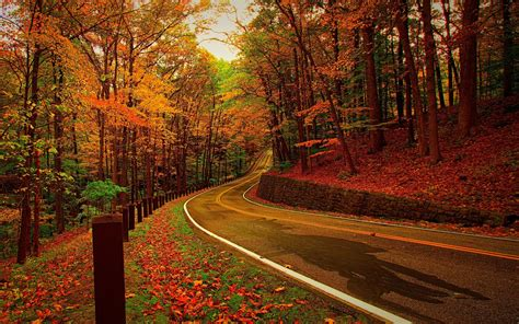 red forest    forest photography