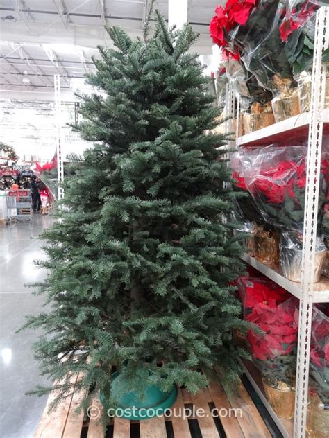 costco xmas trees fresh cut noble fir tree