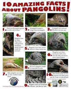 Information About World Meet The Pangolin World Pangolin Day