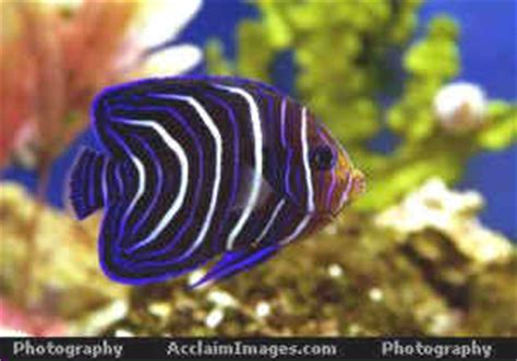brightly colored fish brightly colored fish sea photographs images