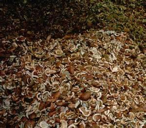 Minyak Kelapa Kopra usaha pengolahan kelapa terpadu kopra
