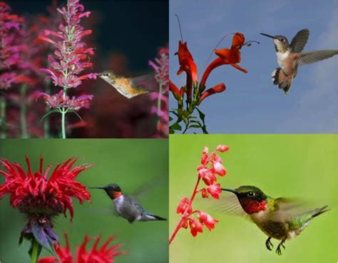 how to attract hummingbirds do it yourself fun ideas