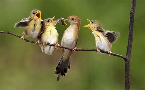birds feeding wallpaper 12932