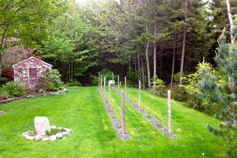 small backyard vineyard landscape design landscaping ideas backyard vineyard