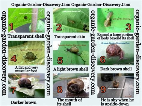 different types of snails in the garden slugs and snails are pests