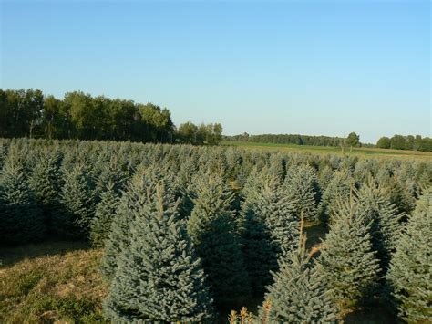 28 best christmas tree farms in michigan list