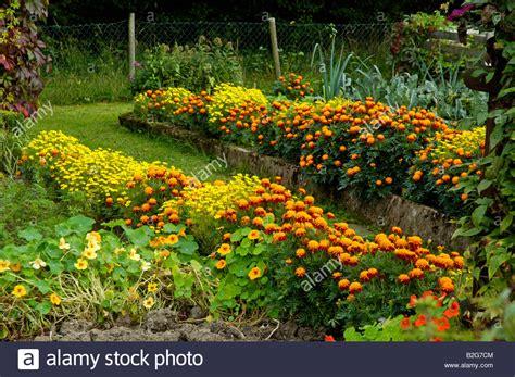 Garten Blumen Pflanzen 1734 by Cottage Garden Bauerngarten Baden Wuerttemberg Germany