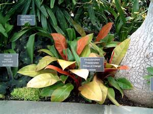 Vase For Bamboo Plant Pden16