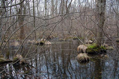 Backyard Vernal Pool River Mud Build A Better Vernal Pool Top 5 Reasons For