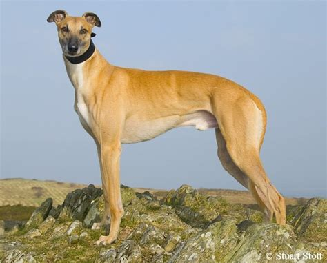 grey hound greyhounds welcome greyhound friendly accommodation in the lake district