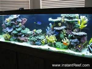 Artificial Coral Reef Fish Aquarium Photos