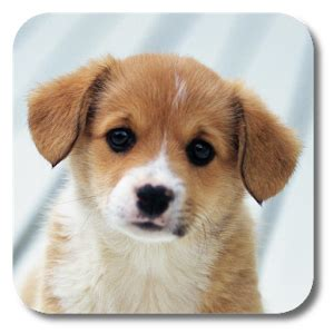google images puppies puppies live wallpaper android apps on google play