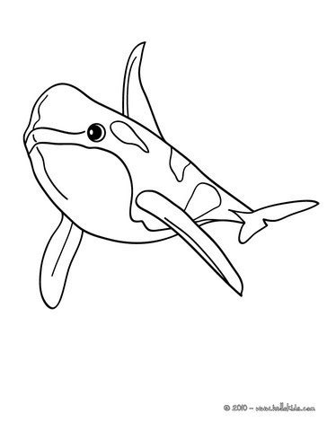 coloring page of bottlenose dolphin bottlenose dolphin coloring pages hellokids com