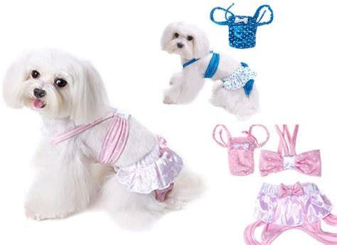 bagno ai cani costumi da bagno per cani l arresto carlino