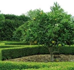 Backyard Growers Citrus Tree Varieties Offered By Waimea Nurseries