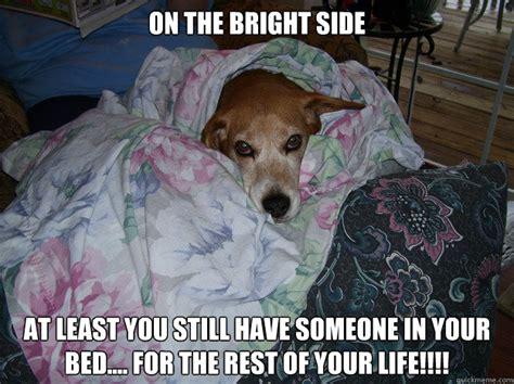Beagle Meme - beagle puppies memes