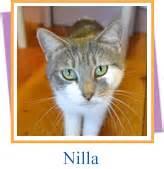 Pet Pantry Orange Ca by Animals Pets Orange County Gov Fl Official