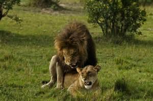 animals mating b just b cause