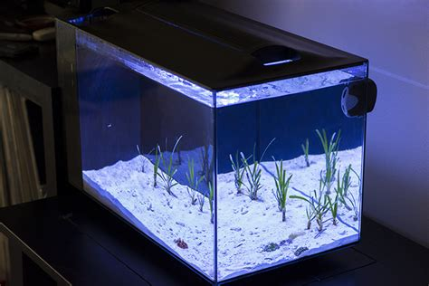 Aquascaping Reef Tank Hands On With The Fluval Evo 13 5 All In One Aquarium