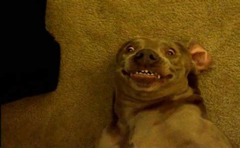 retarded dog blank template imgflip smiling animal meme generator animal best of the funny meme
